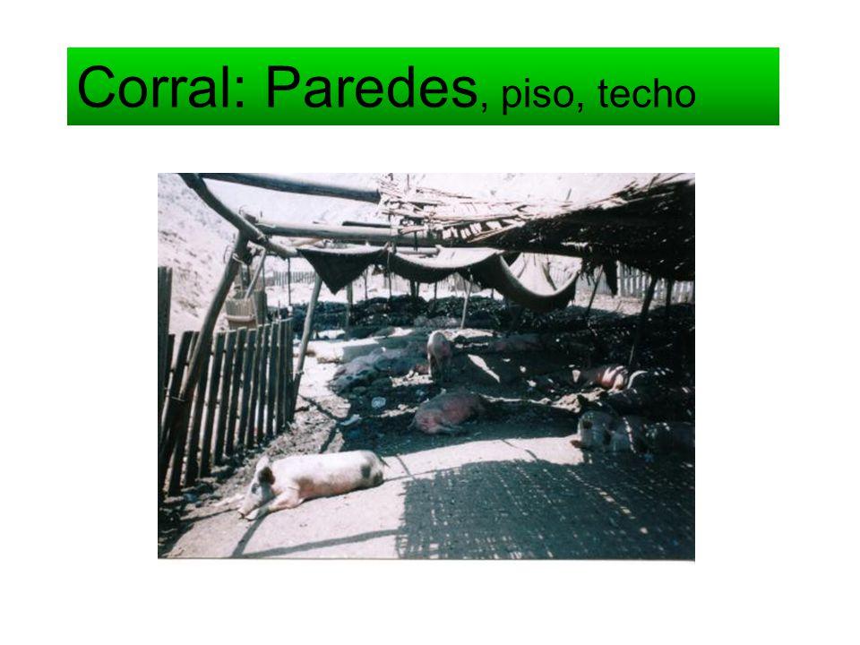 Corral: Paredes, piso, techo