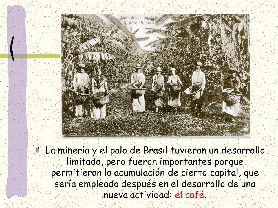 La minería y el palo de Brasil tuvieron un desarrollo limitado, pero fueron importantes porque permitieron la acumulación de cierto capital, que sería empleado después en el desarrollo de una nueva actividad: el café.