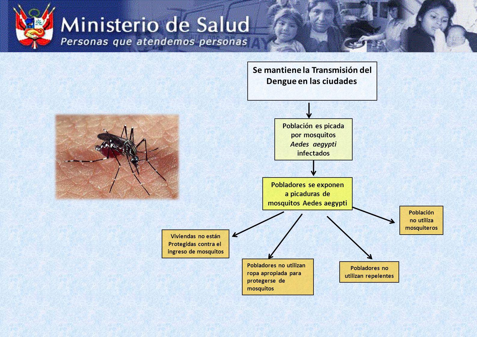 Se mantiene la Transmisión del Dengue en las ciudades