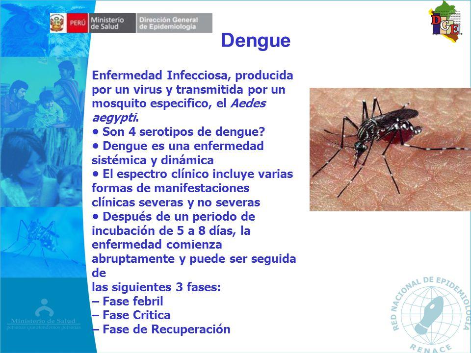 Dengue Enfermedad Infecciosa, producida por un virus y transmitida por un mosquito especifico, el Aedes aegypti.