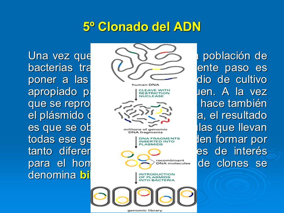 5º Clonado del ADN