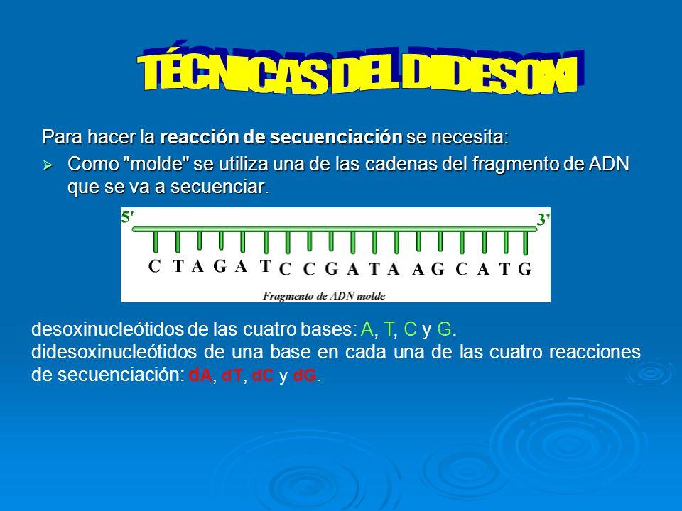 TÉCNICAS DEL DIDESOXI Para hacer la reacción de secuenciación se necesita: