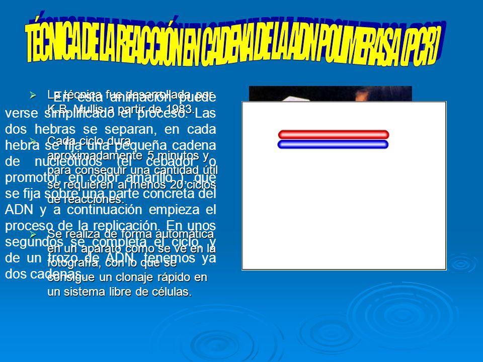 TÉCNICA DE LA REACCIÓN EN CADENA DE LA ADN POLIMERASA (PCR)
