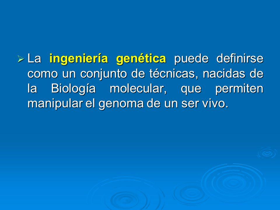 La ingeniería genética puede definirse como un conjunto de técnicas, nacidas de la Biología molecular, que permiten manipular el genoma de un ser vivo.