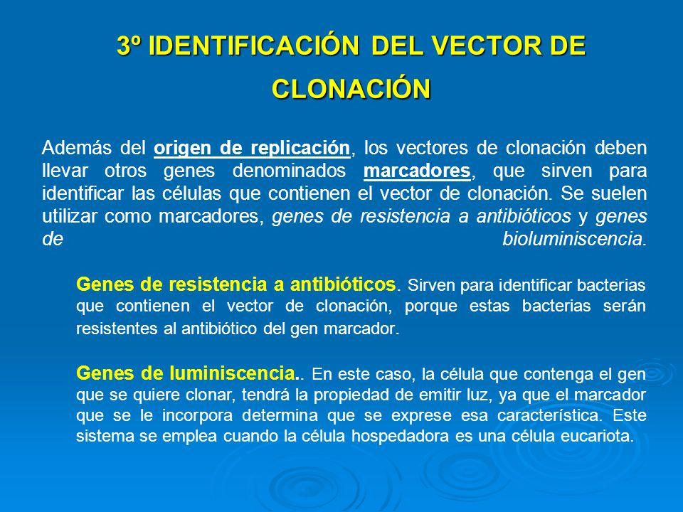 3º IDENTIFICACIÓN DEL VECTOR DE CLONACIÓN