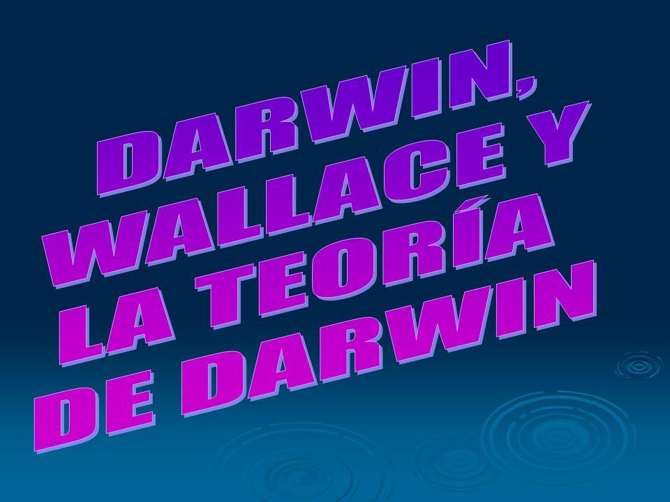 DARWIN, WALLACE Y LA TEORÍA DE DARWIN