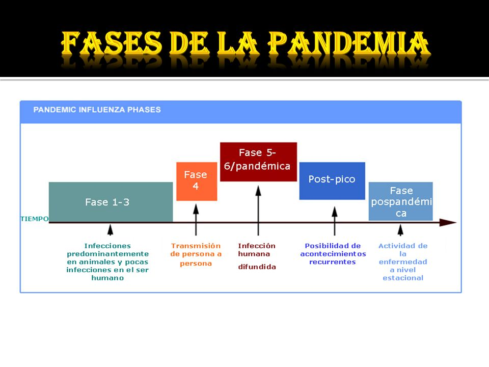 Fases de la pandemia