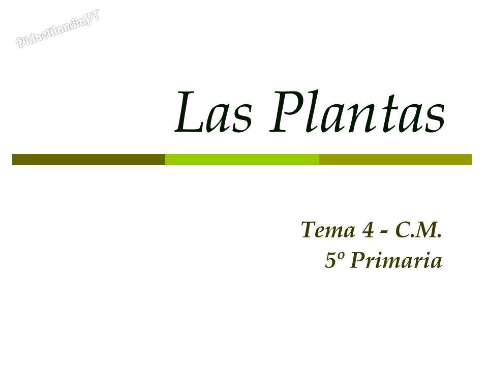 DidactilandiaPT Las Plantas Tema 4 - C.M. 5º Primaria