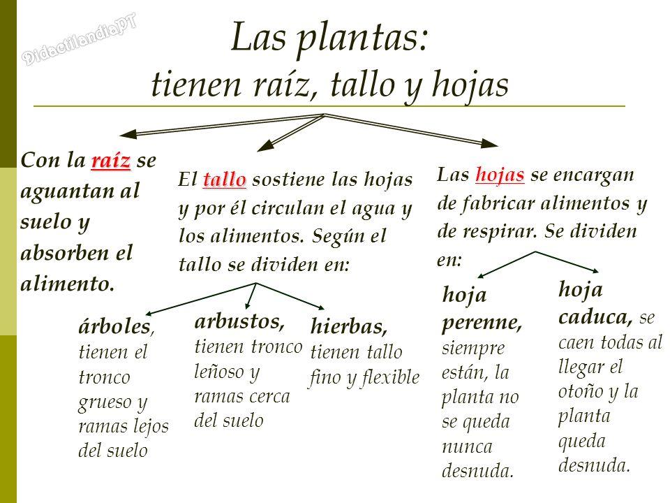 Las plantas: tienen raíz, tallo y hojas