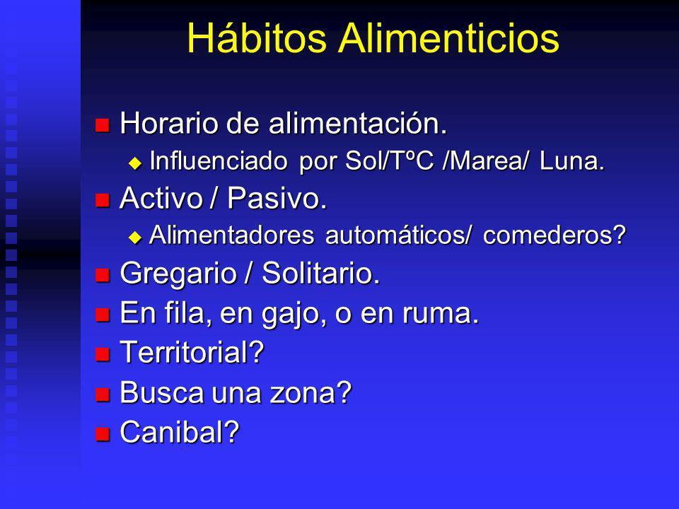 Hábitos Alimenticios Horario de alimentación. Activo / Pasivo.