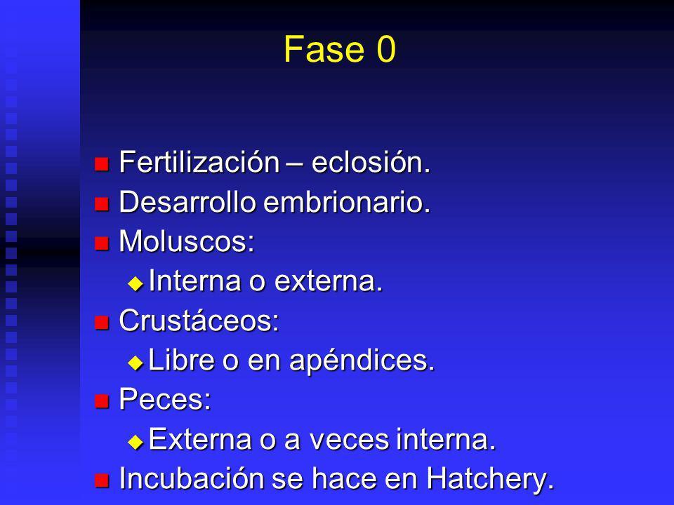 Fase 0 Fertilización – eclosión. Desarrollo embrionario. Moluscos: