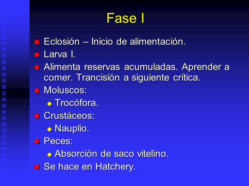 Fase I Eclosión – Inicio de alimentación. Larva I.