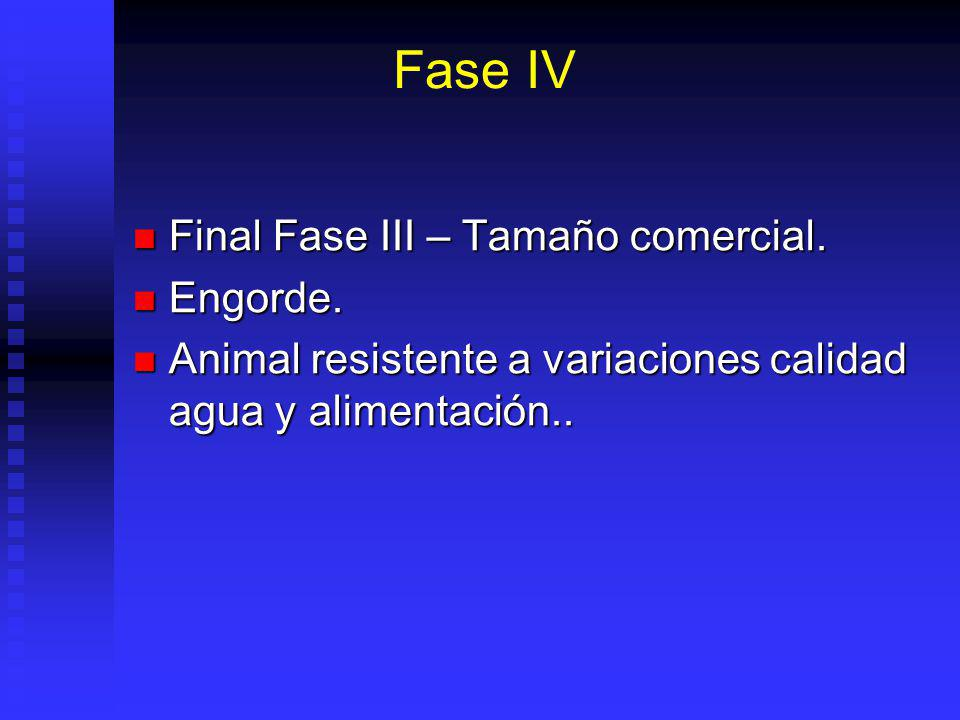Fase IV Final Fase III – Tamaño comercial. Engorde.