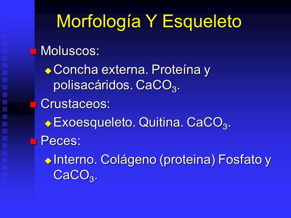 Morfología Y Esqueleto