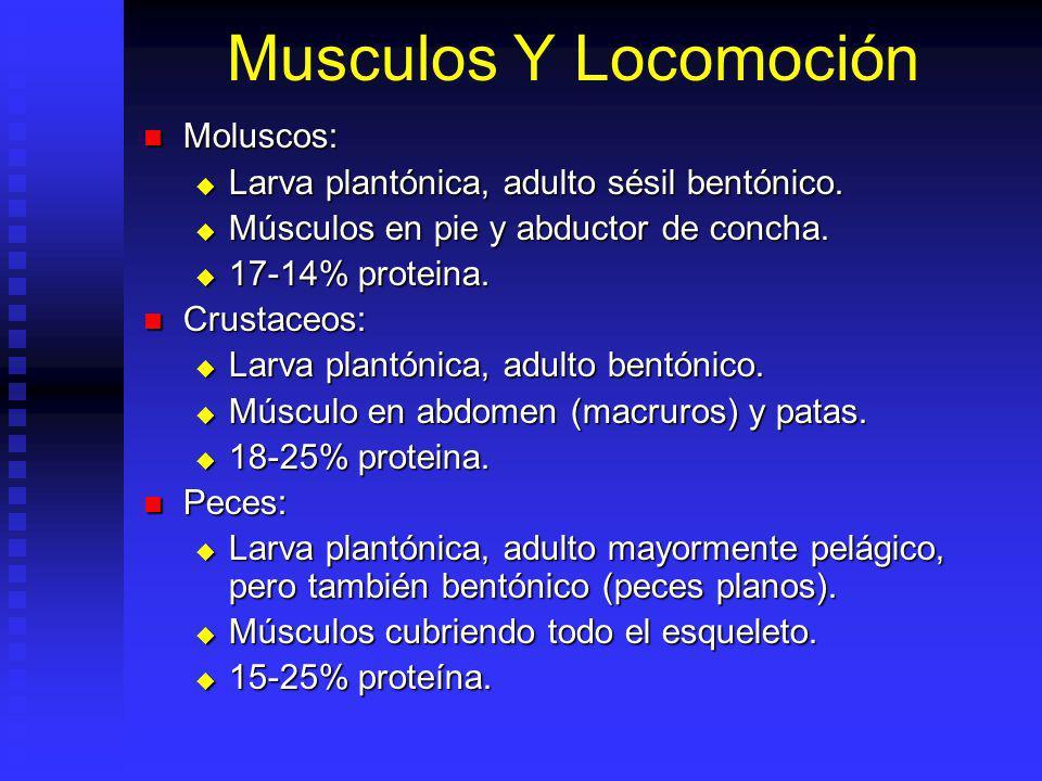 Musculos Y Locomoción Moluscos: