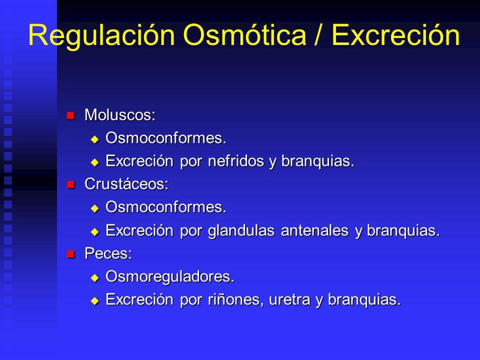 Regulación Osmótica / Excreción