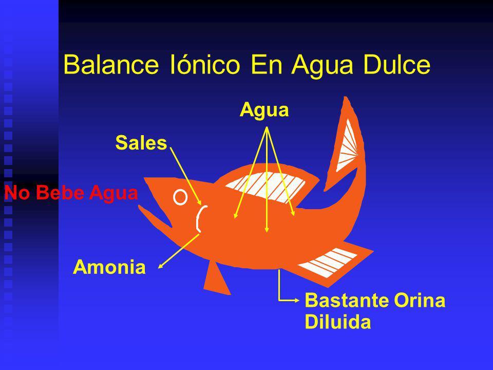 Balance Iónico En Agua Dulce