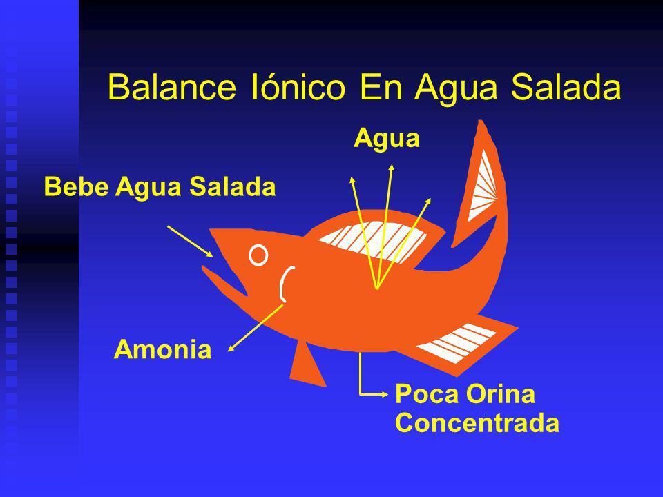 Balance Iónico En Agua Salada