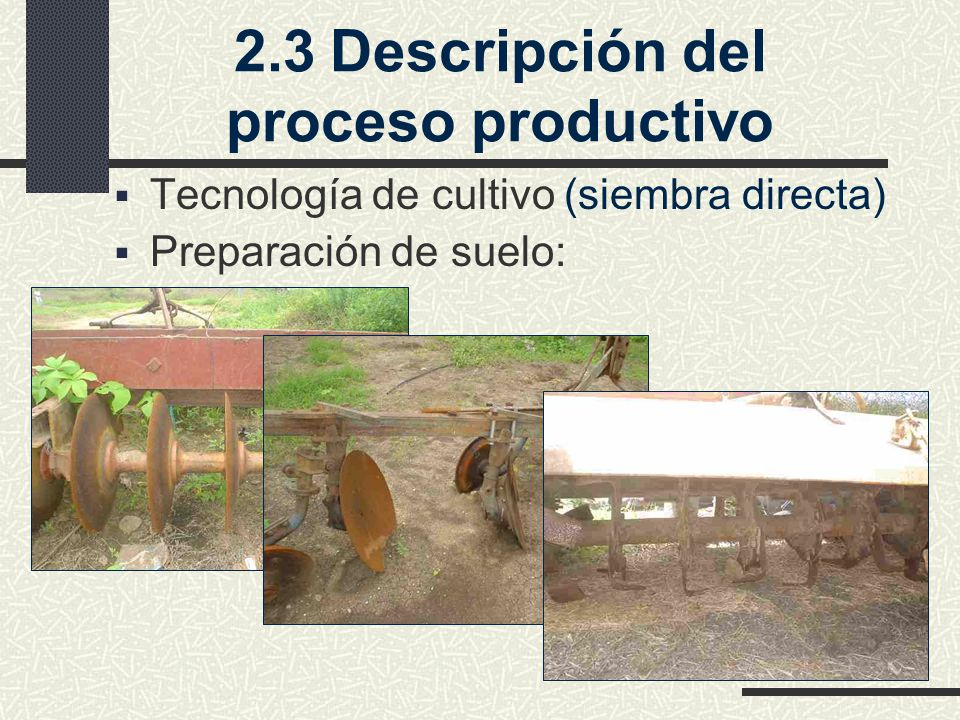 2.3 Descripción del proceso productivo