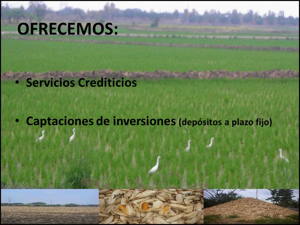 OFRECEMOS: Servicios Crediticios