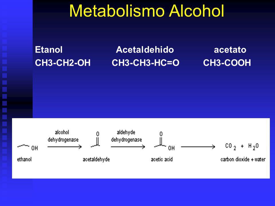 Metabolismo Alcohol Etanol Acetaldehido acetato
