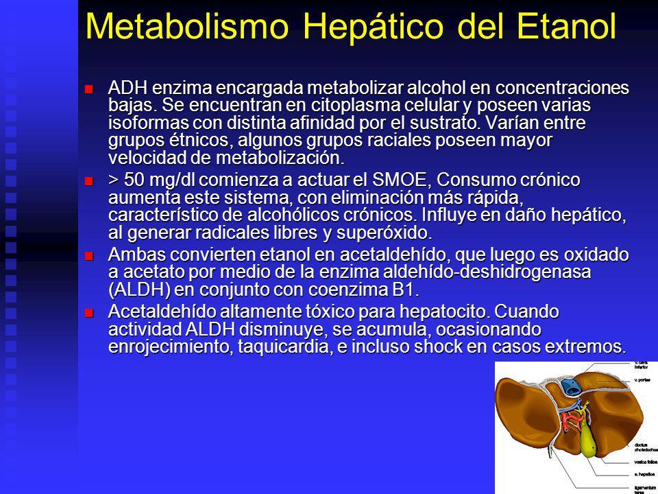 Metabolismo Hepático del Etanol
