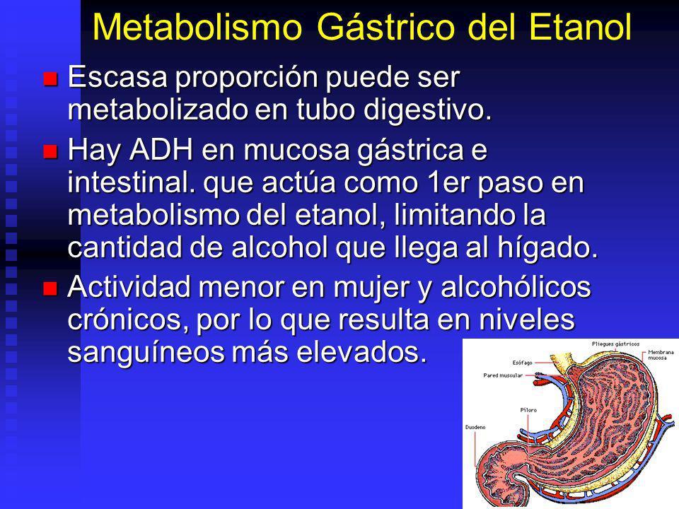 Metabolismo Gástrico del Etanol
