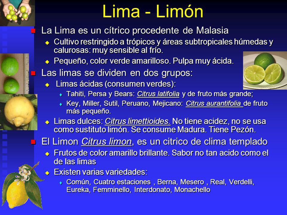 Lima - Limón La Lima es un cítrico procedente de Malasia
