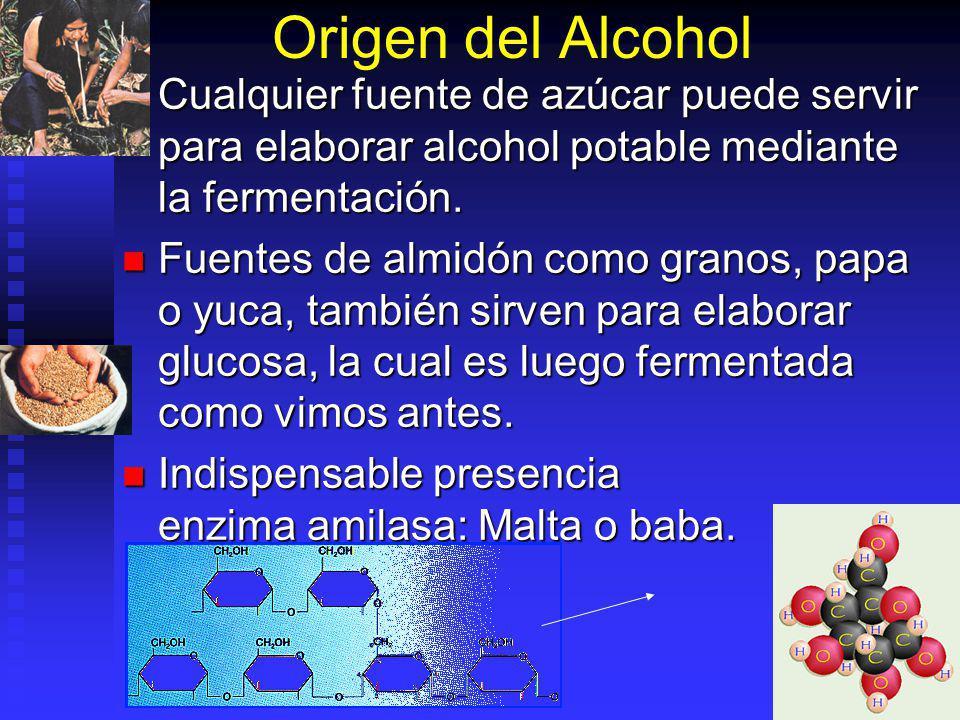 Origen del Alcohol Cualquier fuente de azúcar puede servir para elaborar alcohol potable mediante la fermentación.