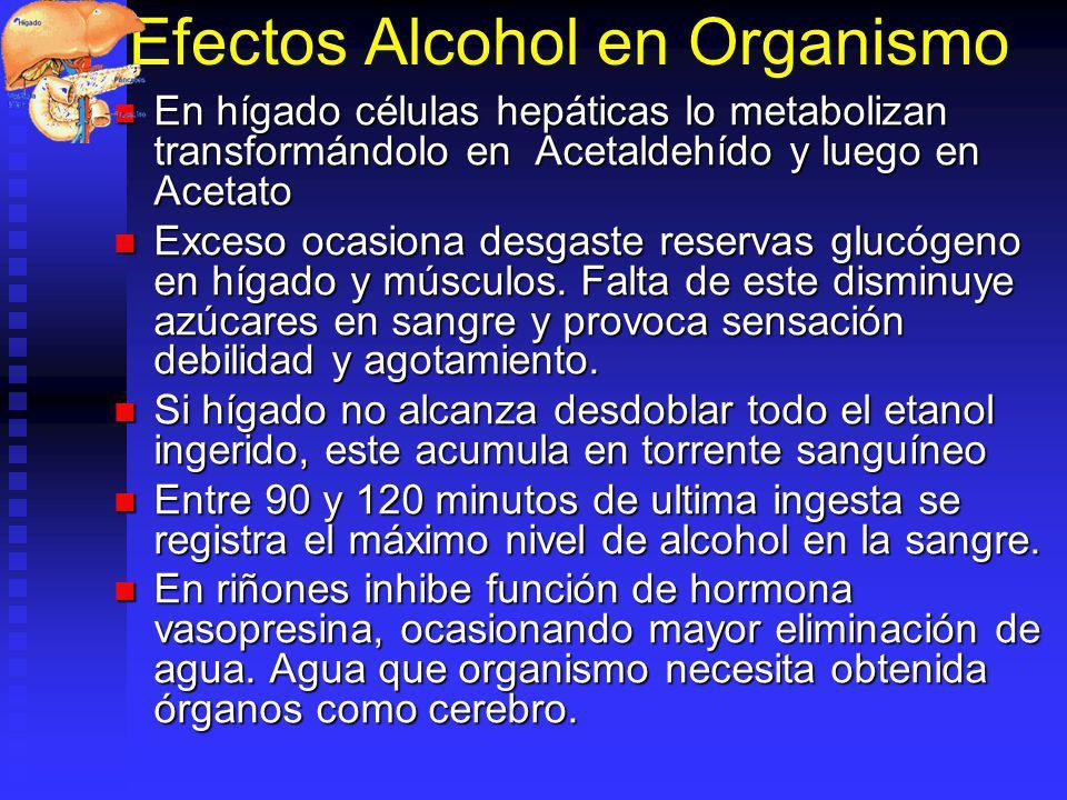 Efectos Alcohol en Organismo