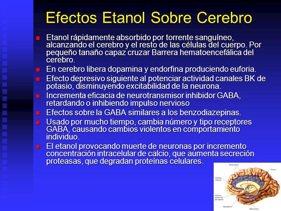 Efectos Etanol Sobre Cerebro
