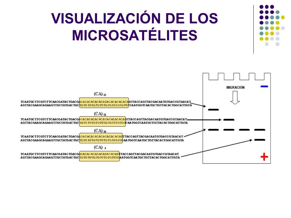 VISUALIZACIÓN DE LOS MICROSATÉLITES