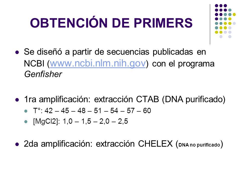OBTENCIÓN DE PRIMERS Se diseñó a partir de secuencias publicadas en NCBI (www.ncbi.nlm.nih.gov) con el programa Genfisher.