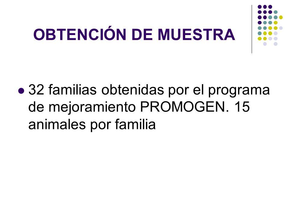 OBTENCIÓN DE MUESTRA 32 familias obtenidas por el programa de mejoramiento PROMOGEN.