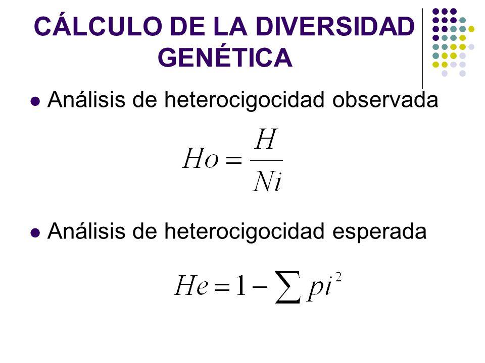 CÁLCULO DE LA DIVERSIDAD GENÉTICA