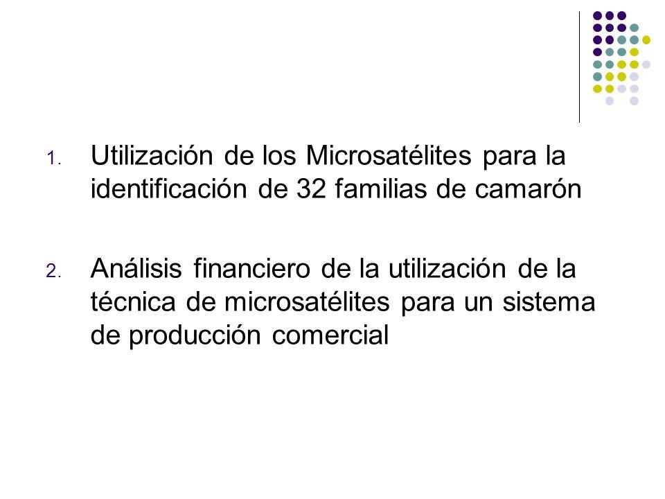 Utilización de los Microsatélites para la identificación de 32 familias de camarón