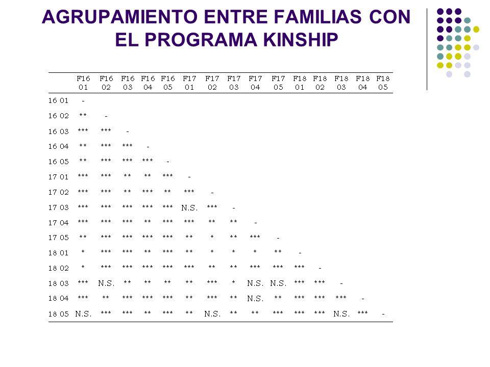 AGRUPAMIENTO ENTRE FAMILIAS CON EL PROGRAMA KINSHIP