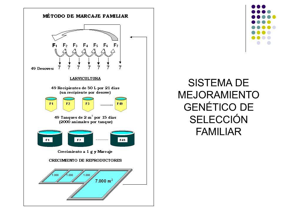 SISTEMA DE MEJORAMIENTO GENÉTICO DE SELECCIÓN FAMILIAR