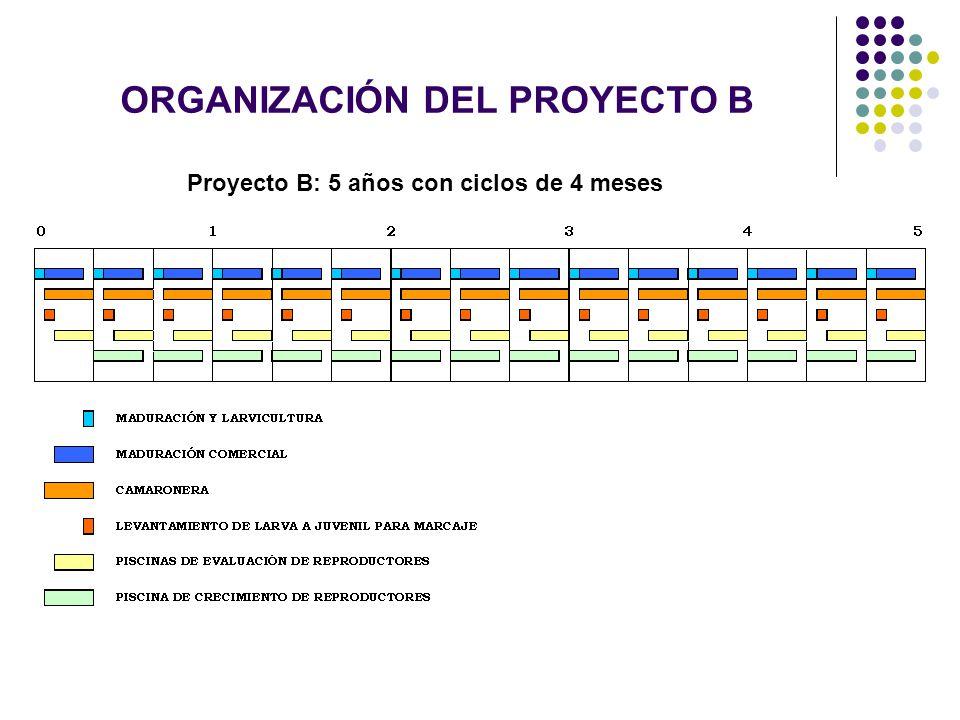 ORGANIZACIÓN DEL PROYECTO B