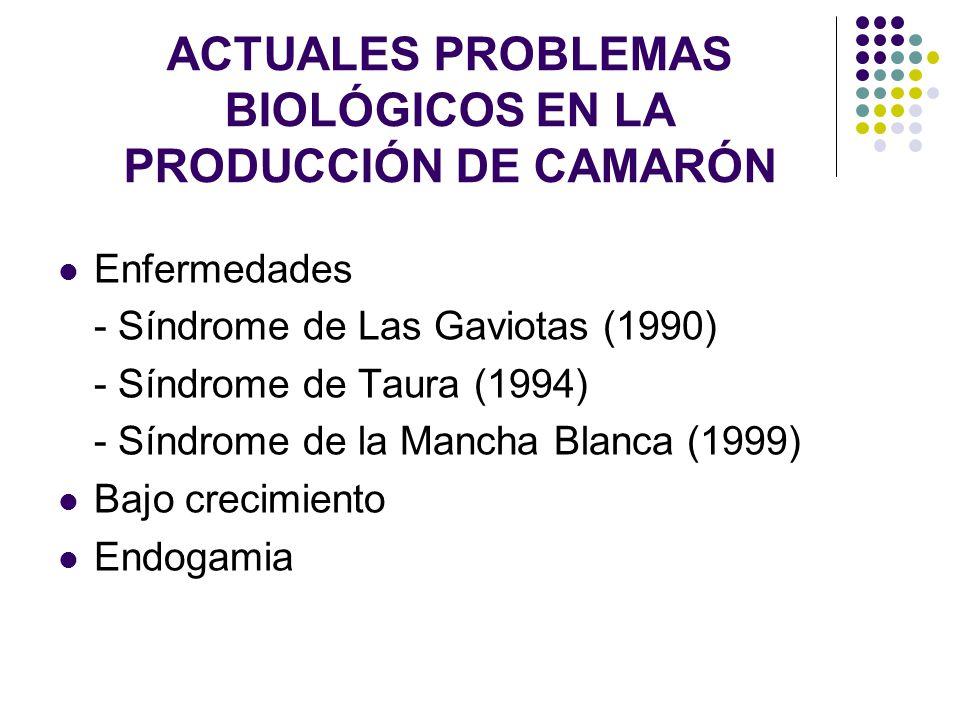 ACTUALES PROBLEMAS BIOLÓGICOS EN LA PRODUCCIÓN DE CAMARÓN