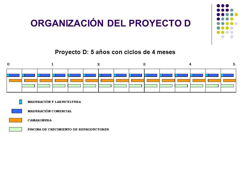 ORGANIZACIÓN DEL PROYECTO D