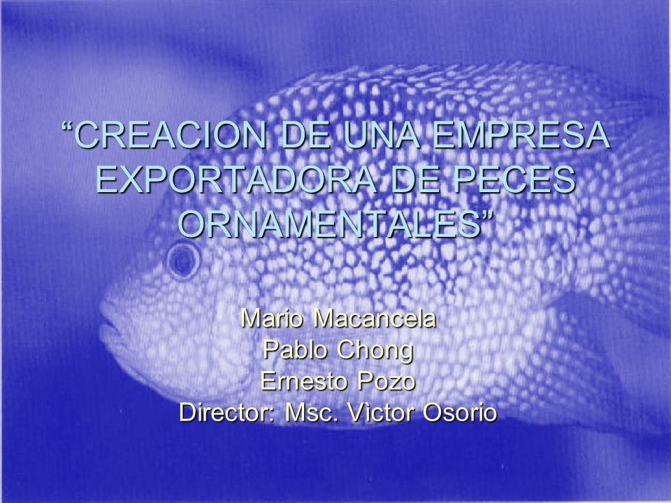CREACION DE UNA EMPRESA EXPORTADORA DE PECES ORNAMENTALES