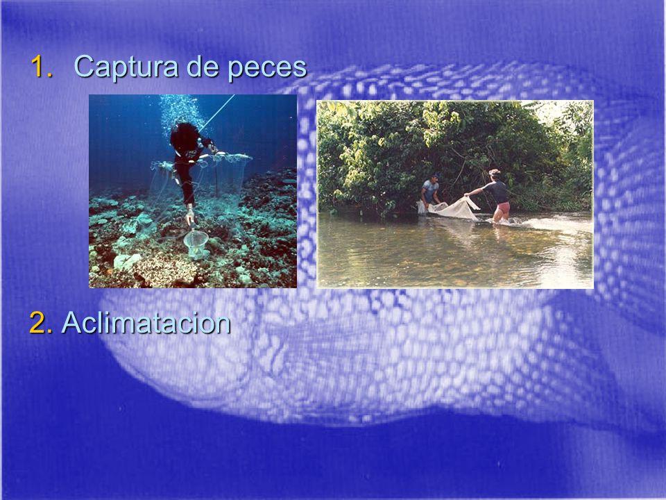 Captura de peces 2. Aclimatacion