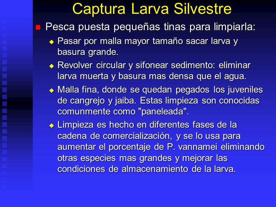 Captura Larva Silvestre