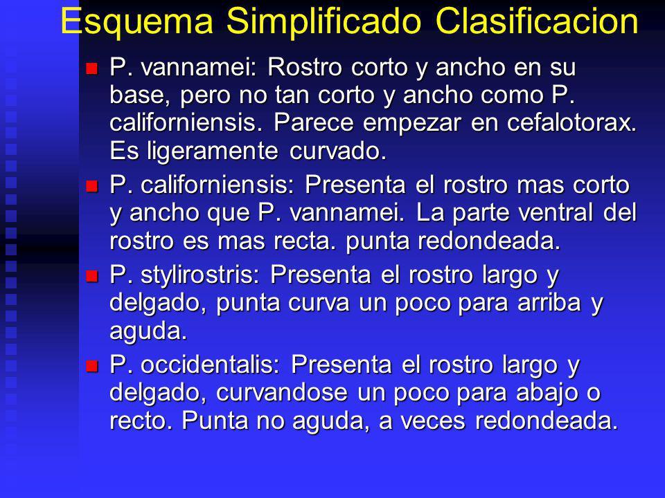 Esquema Simplificado Clasificacion