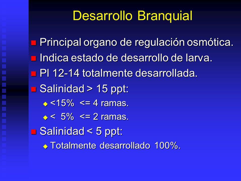 Desarrollo Branquial Principal organo de regulación osmótica.