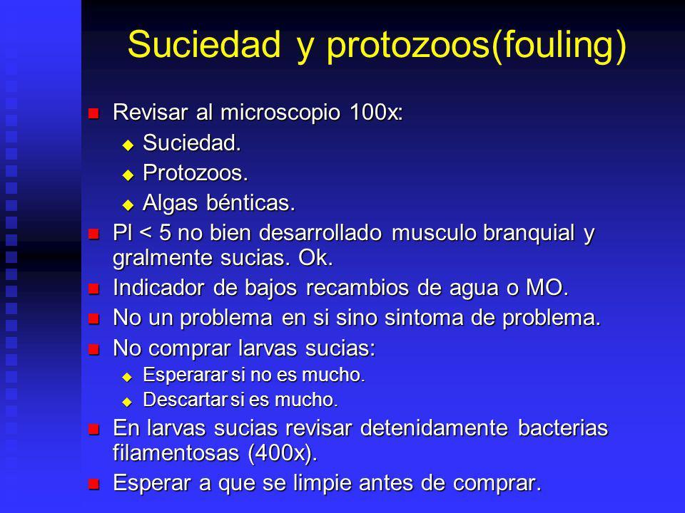 Suciedad y protozoos(fouling)