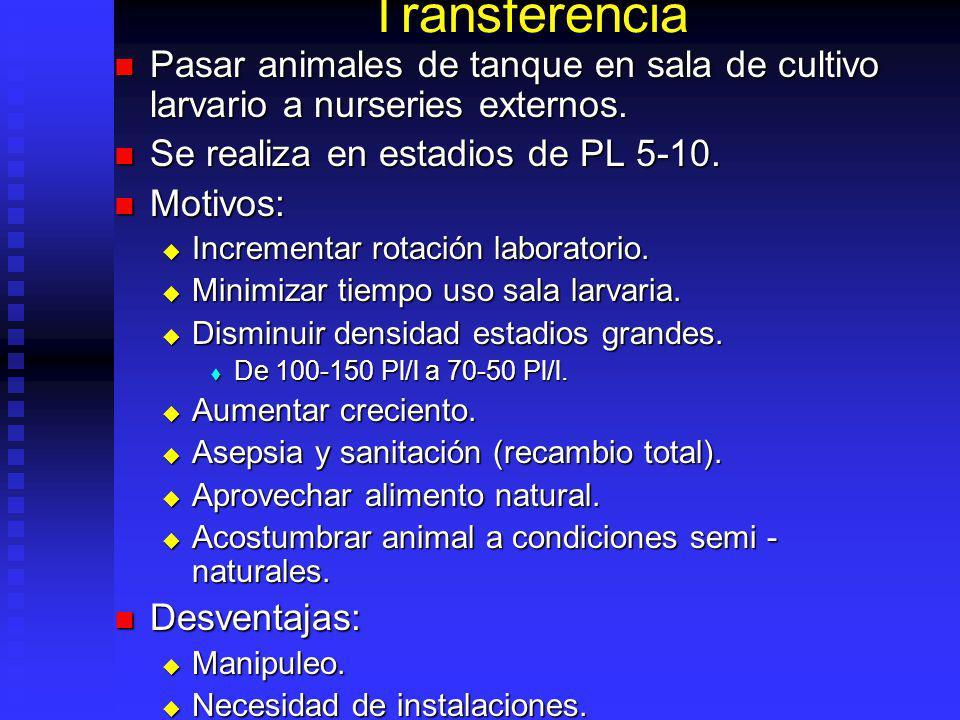Transferencia Pasar animales de tanque en sala de cultivo larvario a nurseries externos. Se realiza en estadios de PL 5-10.