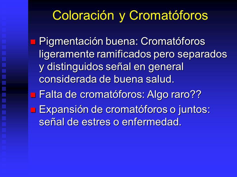 Coloración y Cromatóforos