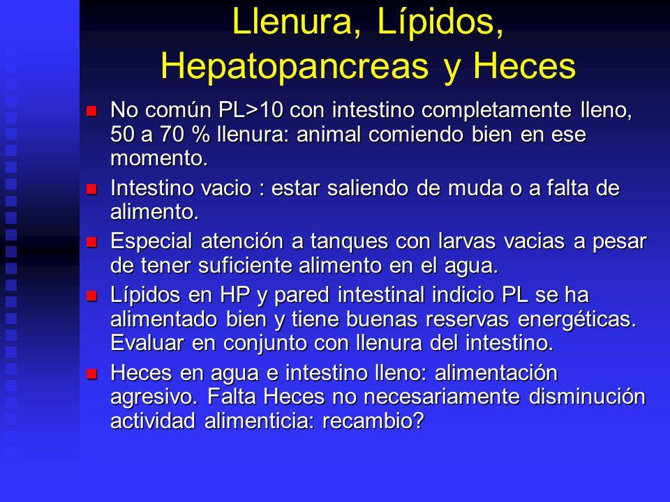 Llenura, Lípidos, Hepatopancreas y Heces